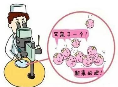 做试管婴儿进行冷冻胚胎移植好吗?揭秘人工周期移植冻胚流程
