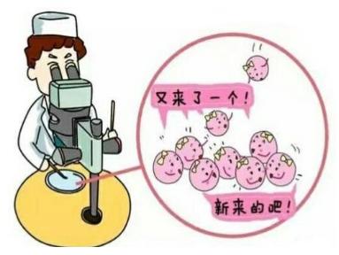 做试管婴儿进行冷冻胚胎移植好吗?移植冷冻胚胎流程